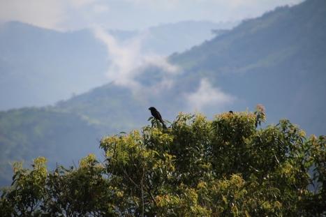 crow reposing on a tree