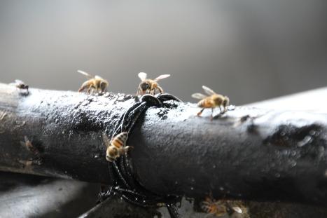 bees at brown sugar